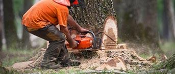 élagage d'arbres pas cher à Colombes