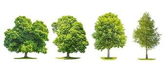 devis gratuit élagage d'arbres à Roubaix