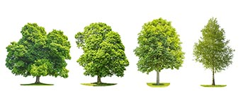 élagage arbre à Ajaccio