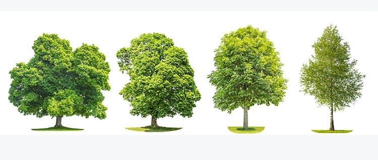devis élagage d'arbres Dijon