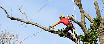 élagage d'arbres Sète